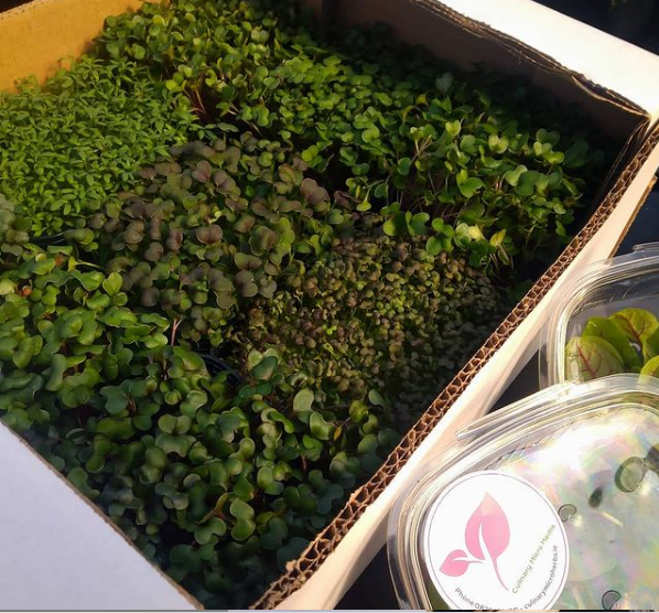 Microgreens Chef's Box, a mix of live Microgreens to provide variety of colours, flavours and textures, to create many and diverse dishes.