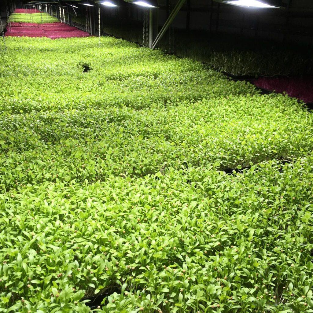 Locally grown products (Dublin, Ireland)