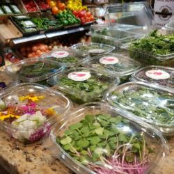 Microgreens and Flowers Evergreen