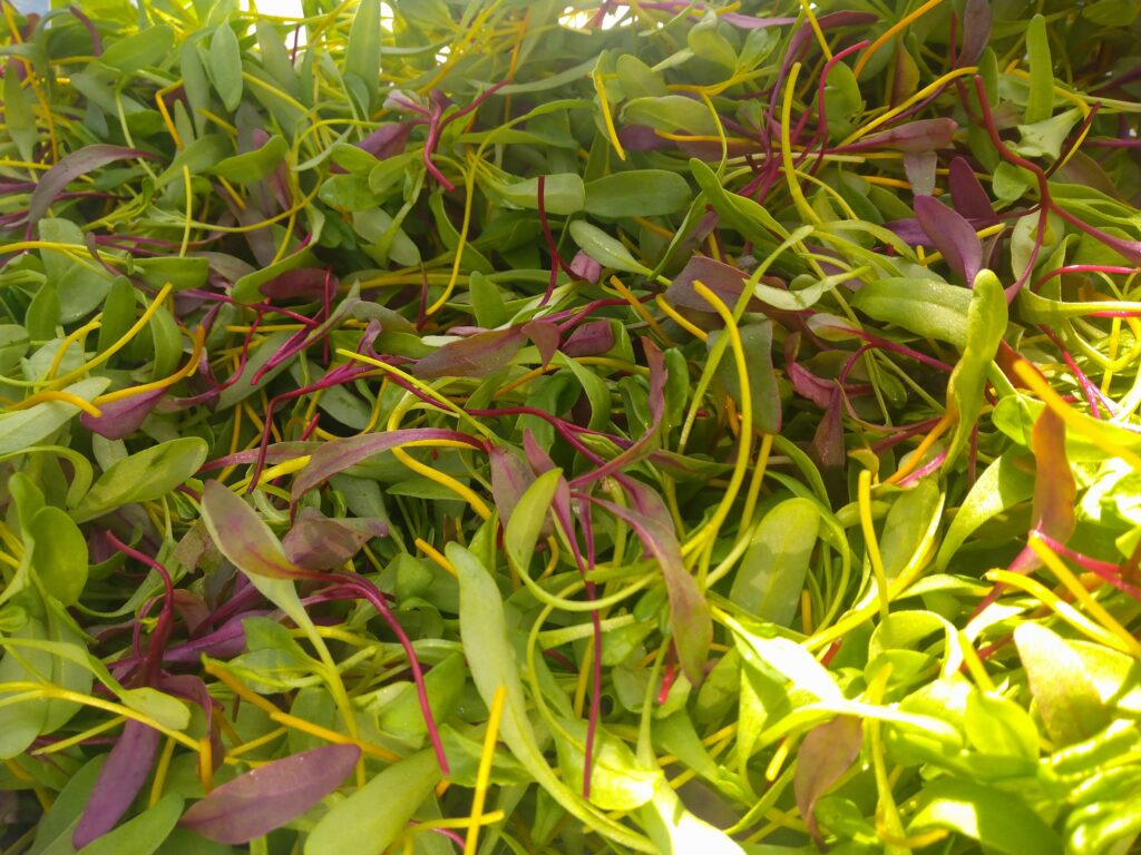 Locally grown products, Microgreens grown in Dublin Ireland