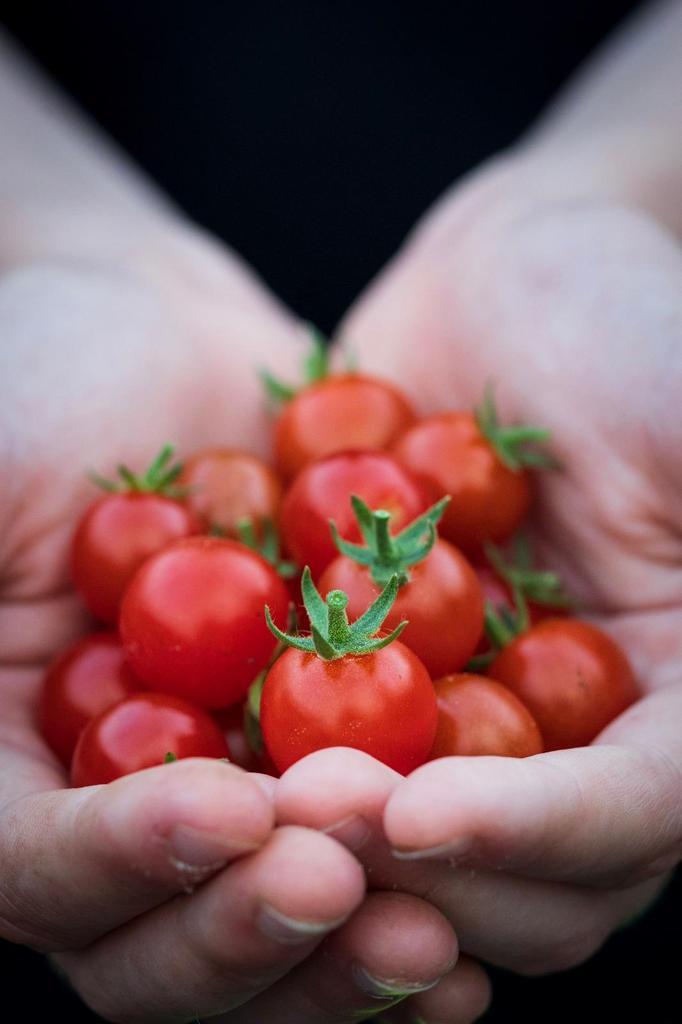 Locally grown products Irish organic tomatoes Dublin Ireland