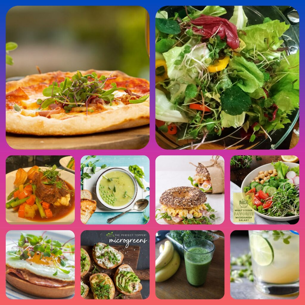 Microgreens for your family, variety of ways to add Microgreens to your meals
